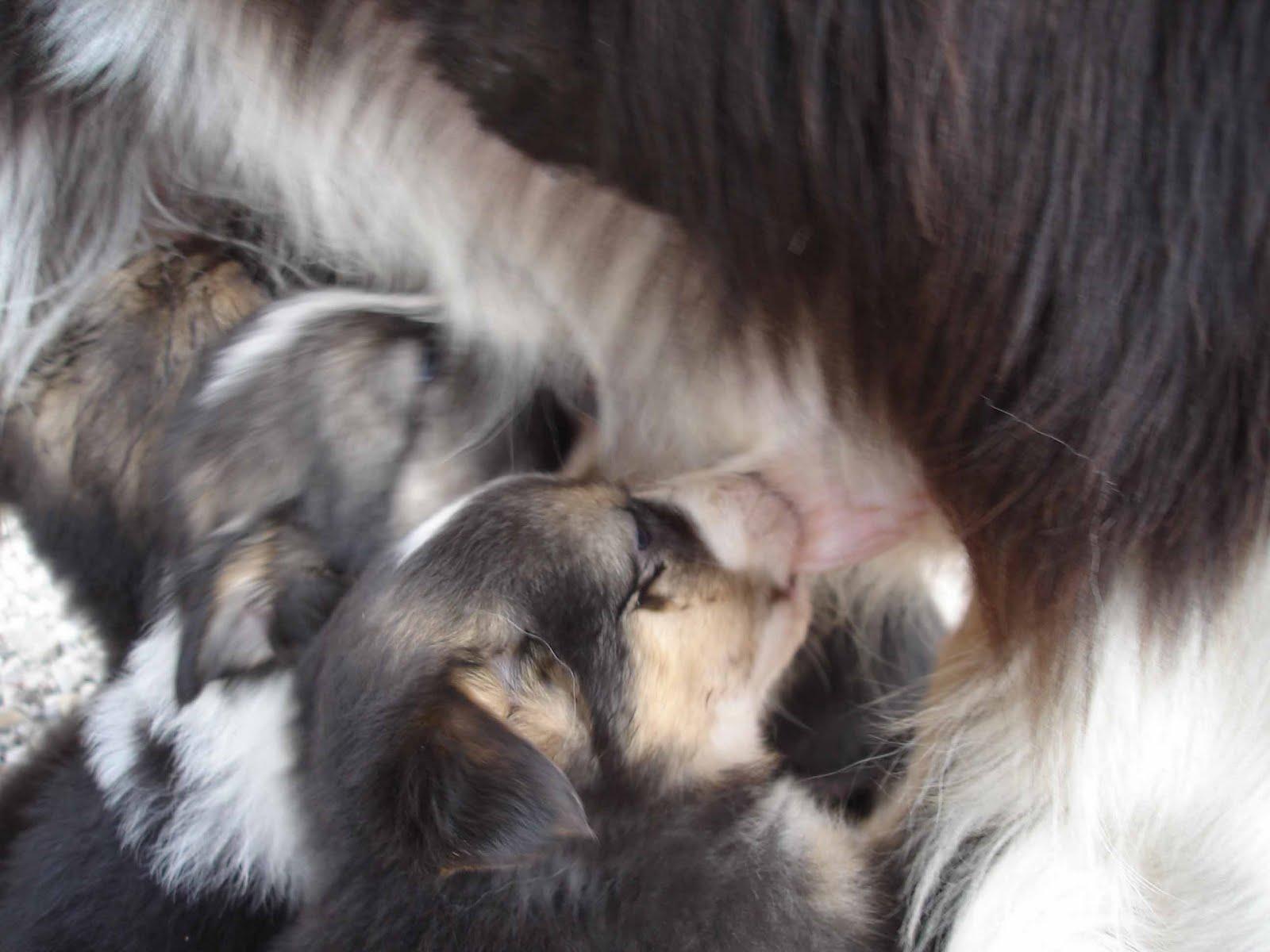 In esplorazione oltre lo stagno di rane regalo cuccioli for Cerco moto gratis in regalo